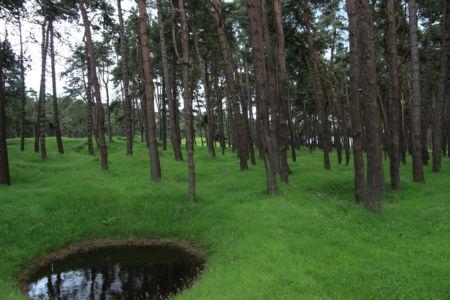 Krater im Wald von Vimy